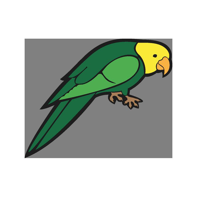 Картинки попугаи для детей на прозрачном фоне