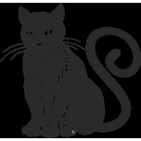 Кошка с длинным Хвостом и большими Усами